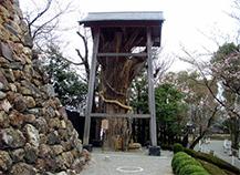 犬山城の見所③神木大杉様